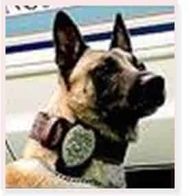 """<span class=""""entry-title-primary"""">K-9 Ralph</span> <span class=""""entry-subtitle"""">[North Lauderdale, Florida]</span>"""