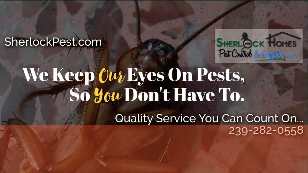 """<span class=""""entry-title-primary"""">Thank You Jeff Bender of Sherlock Homes Pest Control & Irrigation</span> <span class=""""entry-subtitle"""">(4) Gift Cards</span>"""