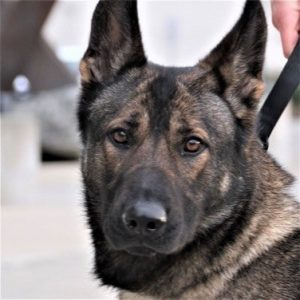 """<span class=""""entry-title-primary"""">K-9 Ronja</span> <span class=""""entry-subtitle"""">[Tacoma, Washington]</span>"""