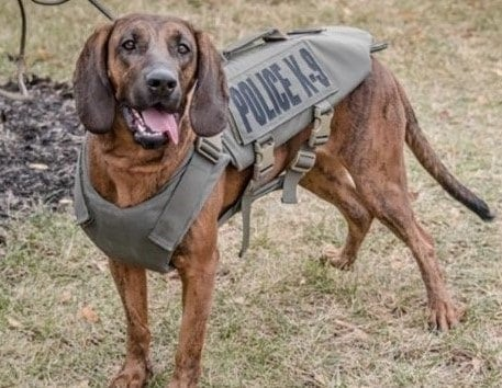 """<span class=""""entry-title-primary"""">K-9 Hera</span> <span class=""""entry-subtitle"""">[Hagerstown, Maryland]</span>"""
